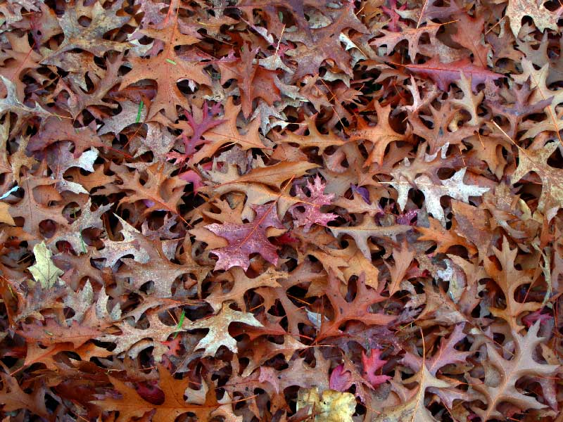nov-3-leaves.jpg